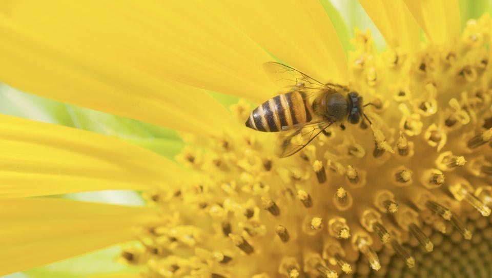 Ukrepi za večjo zaščito čebel