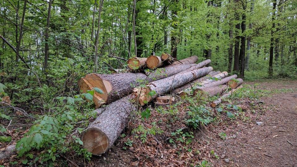 Slovenci že porabili vse letošnje naravne vire