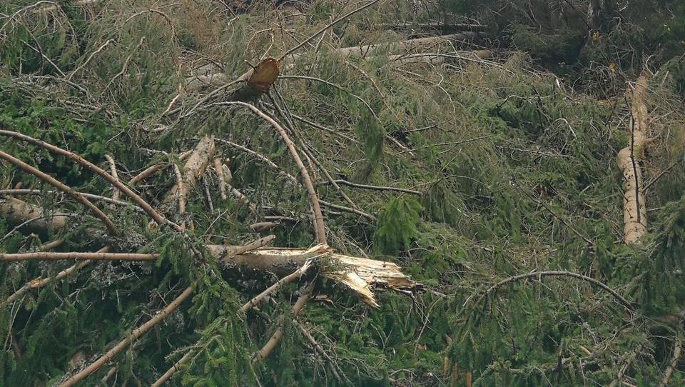 Veter poškodoval okoli sto tisoč kubičnih metrov lesa v državnih gozdovih