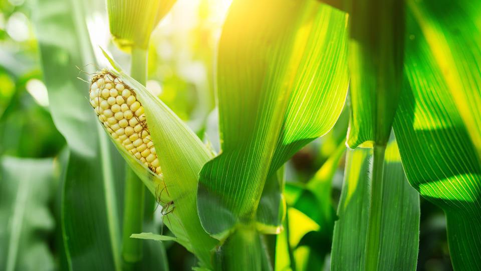 Napredne tehnologije v poljedelstvu: z droni do večjega in boljšega pridelka