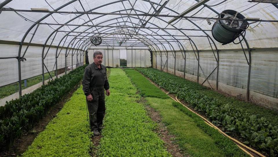 (video) Po Čebronovo zelenjavo hodijo tudi Italijani