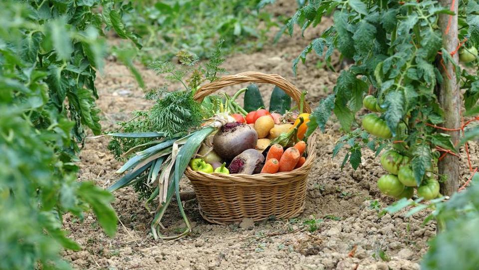 Kaj prinaša nova evropska direktiva o ekološkem kmetovanju