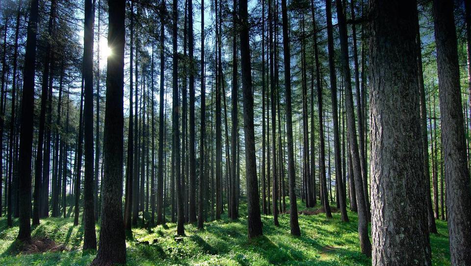 Izdatki za varstvo okolja so vse višji