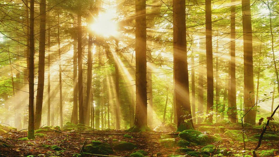 KGZS nasprotuje obdavčitvi kmetijskih zemljišč in gozdov