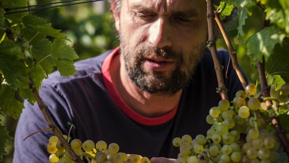 Butični vinarski trend, ki izhaja iz davnine
