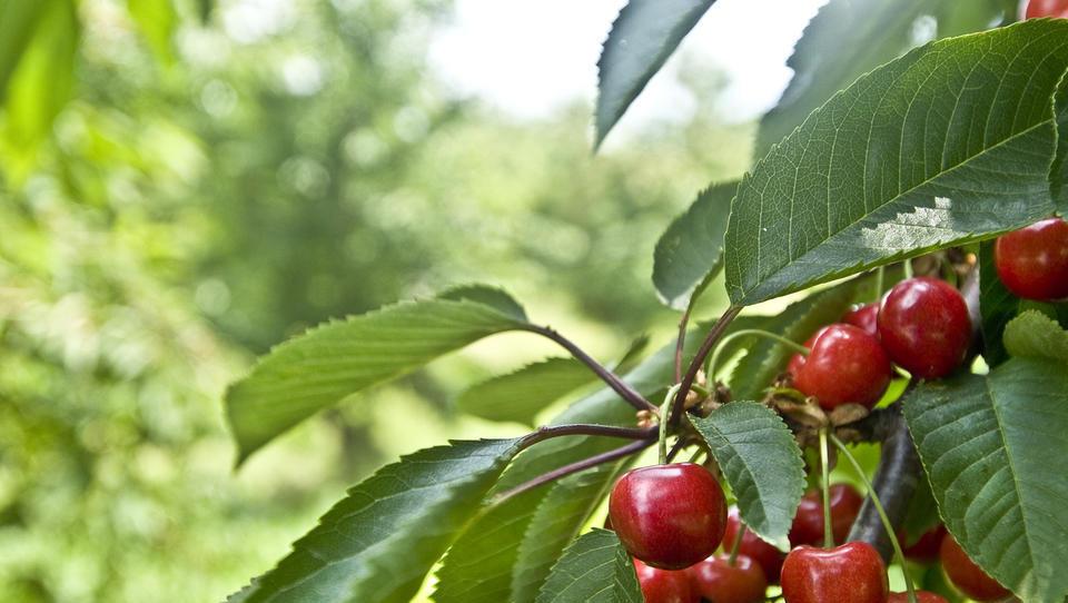 Zakaj država ščiti goljufive preprodajalce sadja in zelenjave?