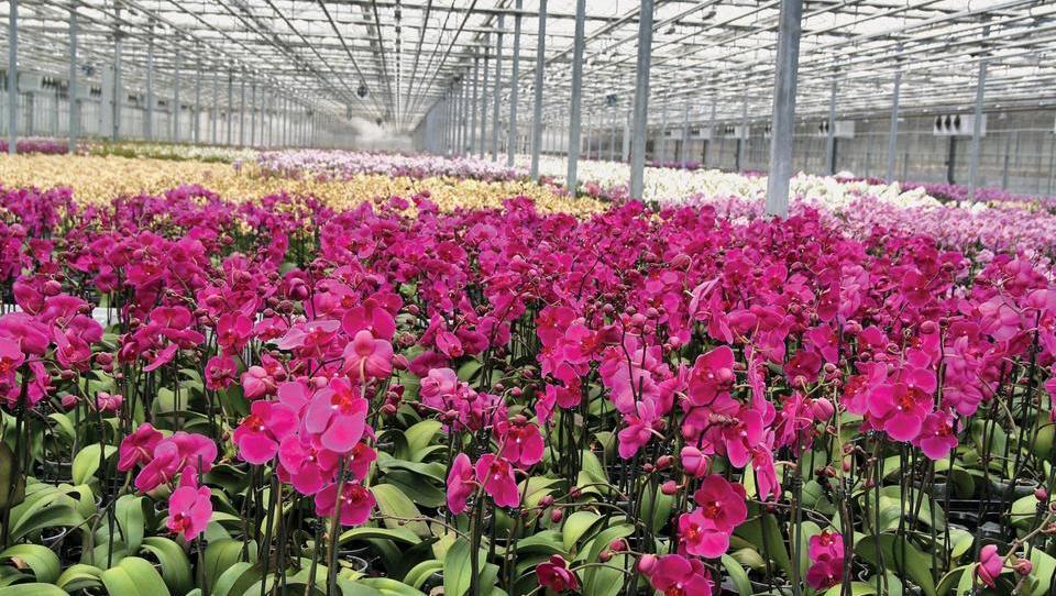 Ocean Orchids v sodelovanje z Ikeo pri logistiki rastlin