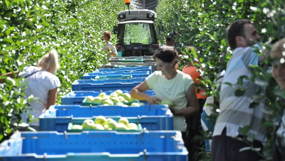 Država povečuje sofinanciranje premij za kmetijska zavarovanja