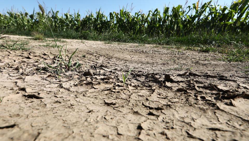 Vlada je nemškim kmetom obljubila do 340 milijonov evrov pomoči