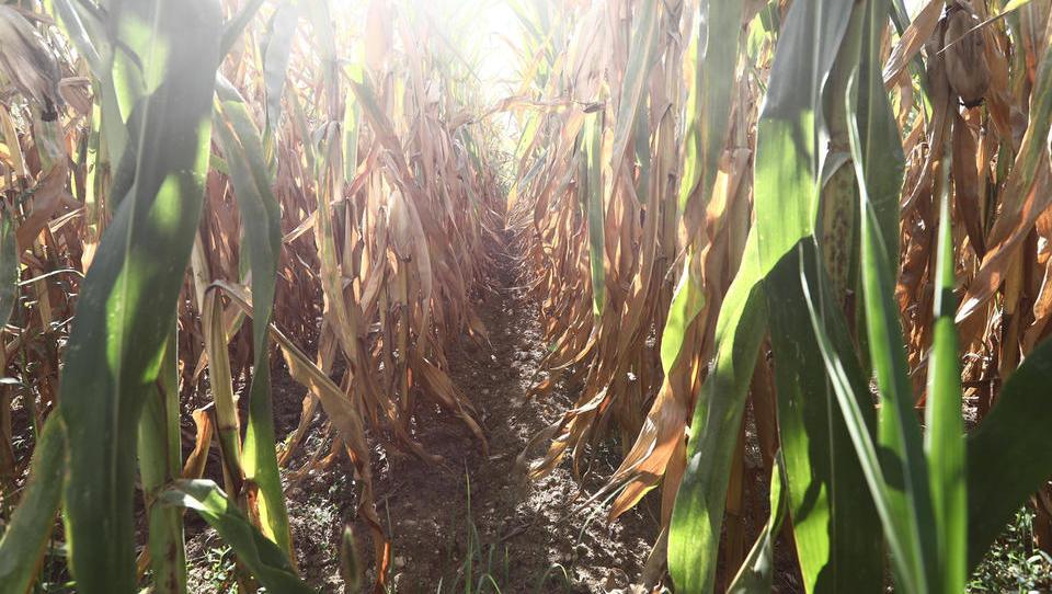 V kmetijstvu je veliko tveganj, kako jih upravljamo?
