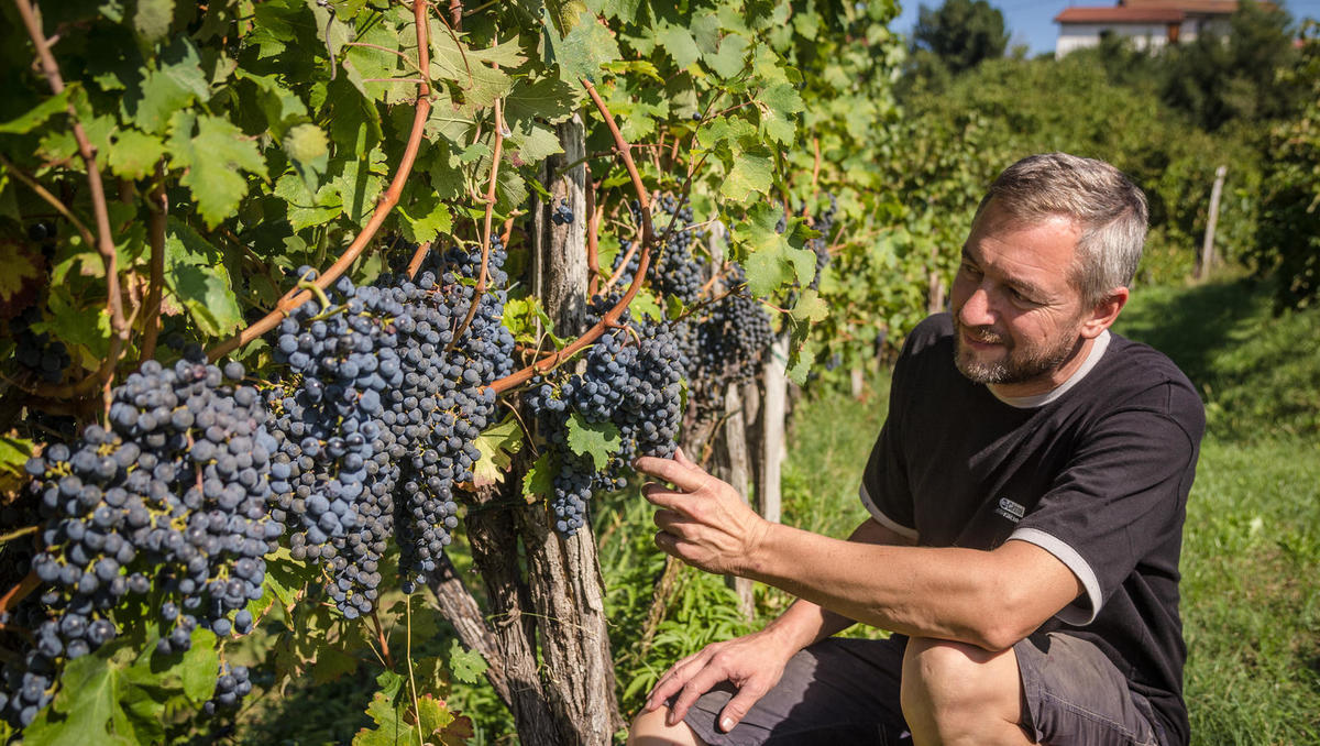 Kolumna Aleksa Simčiča: Letnik, ki ga vinski zbiratelji ne bi smeli zamuditi